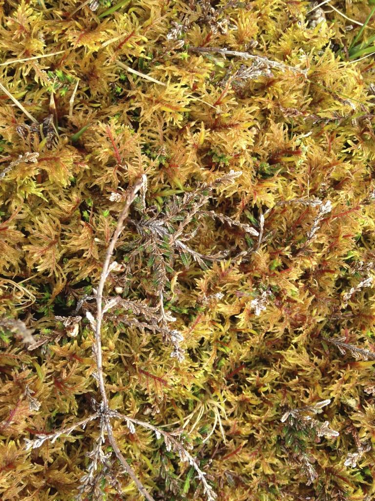 castlebay sphagnum moss colors